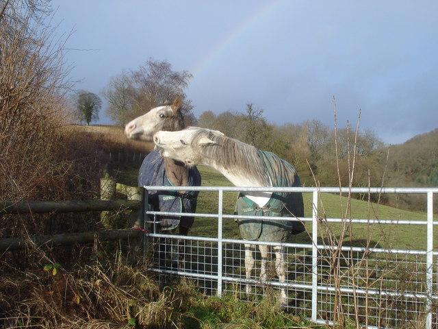 Horses near Bryncalled