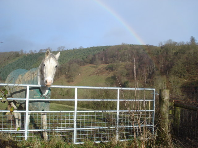 Horse near Bryncalled
