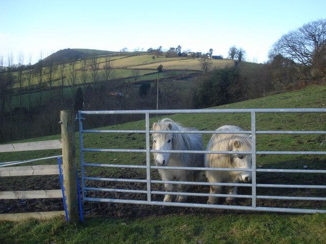 Ponies at  Roseheart Kingdom