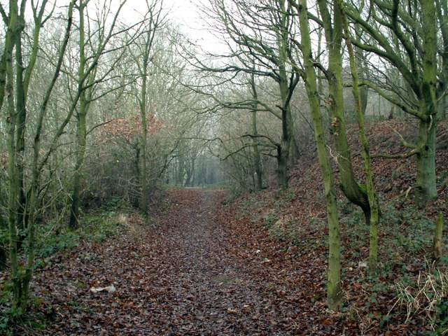 Woodland footpath opposite Gipsy Lane