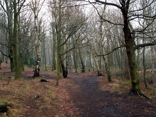 A footpath in Jobson Wood