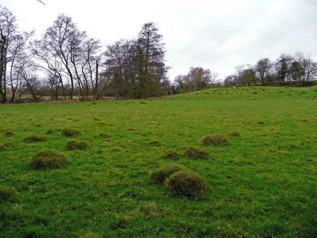 Anthills in pasture