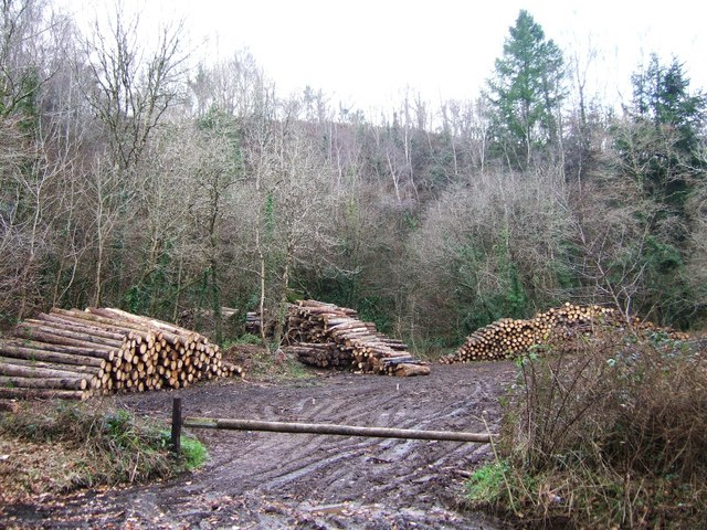 Log piles in old quarry