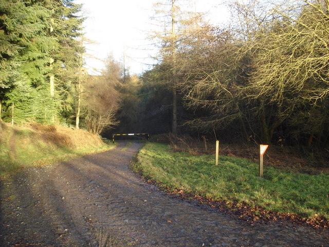 Forest track near Meeroak Farm