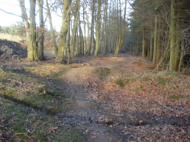 Forest path near Meeroak Farm