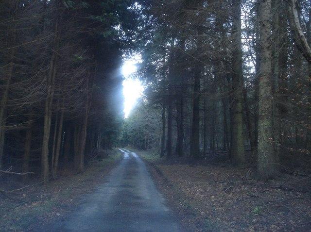 Darky Dale Lane - 1