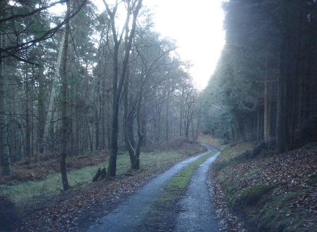 Darky Dale Lane - 2