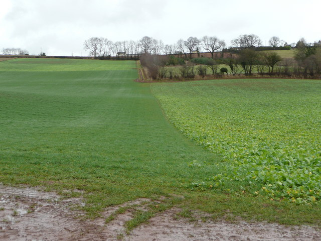 Line of footpath up Linton Hill