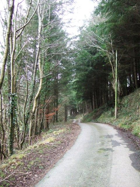 Lane past Blinsham Wood