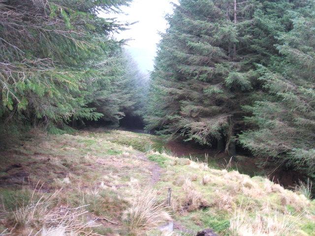 Path down through the trees
