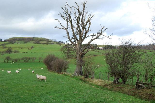 Grazing land towards the Mynydd-y-briw
