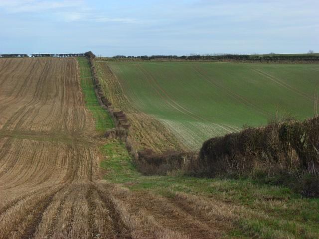 Farmland above Piddlehinton