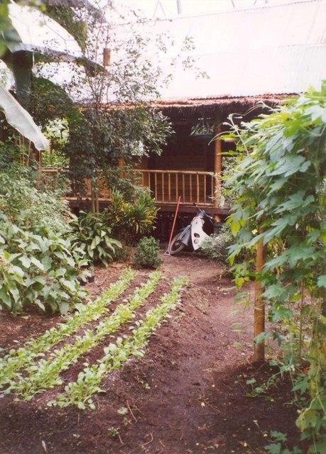 Malaysian garden, Eden Project, St Blaise CP
