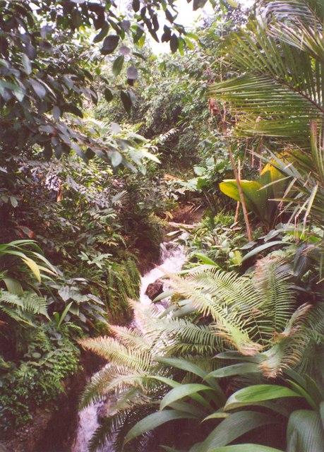 Jungle stream, Eden Project, St Blaise CP