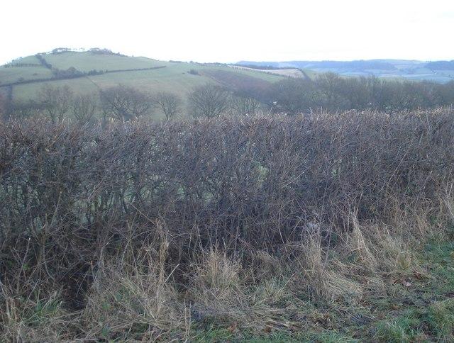 Clunbury Hill