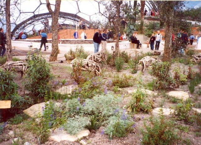 Pigs and cork oaks, Eden Project, St Blaise CP