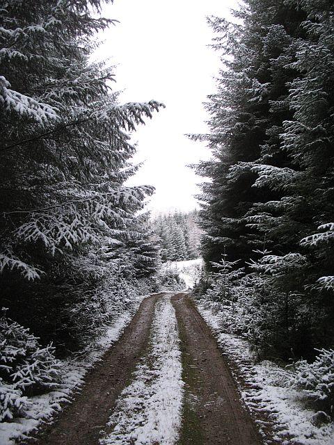 Forest road, Coille Druim Farmolach