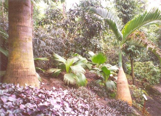 Palms, Eden Project, St Blaise CP