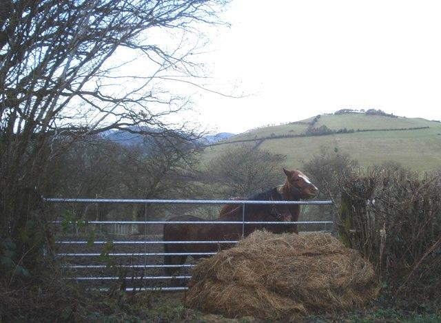 Feeding time near Llan Farm