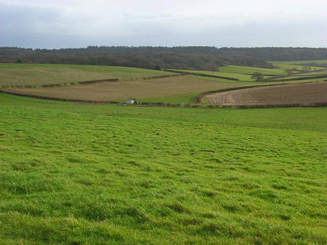 Farmland, Puddletown