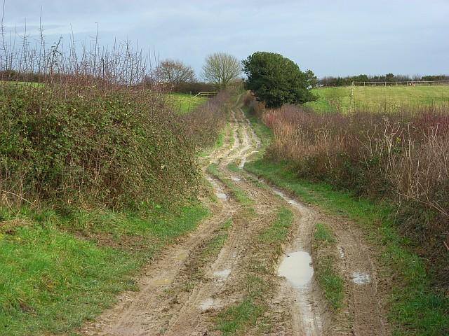 Ridge Way near Puddletown