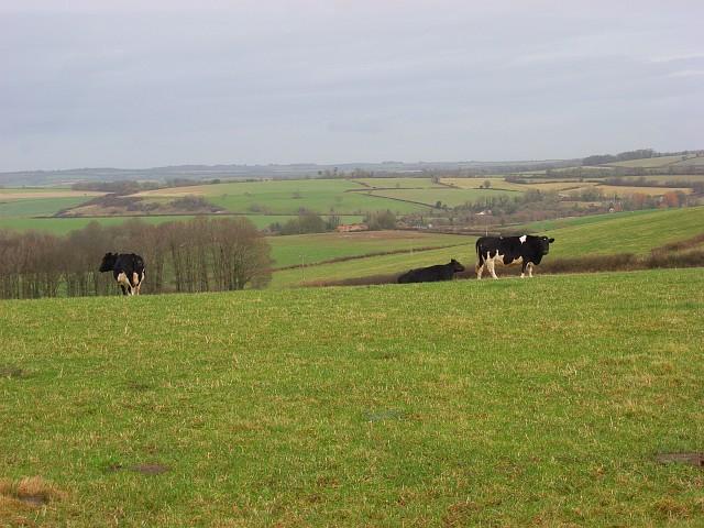 Pastures, Puddletown