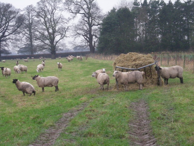 Livestock at Broadoak