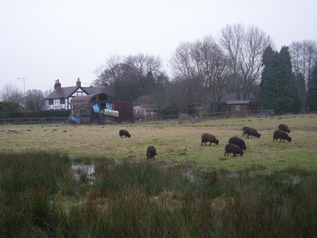 The black sheep of the village.