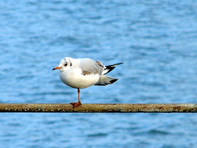 Showing off on Ryde Pier