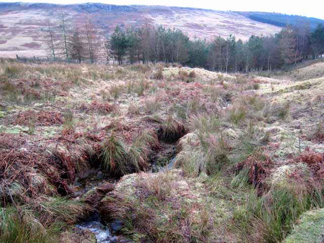 Hollin Burn and the Cottonshope valley