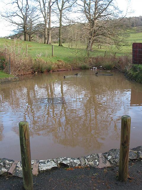 Pond in Ledbury Park