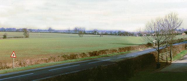 Emerging crop, Reepham, Lincs.