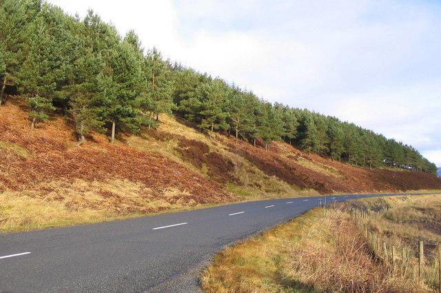 Forestry in Tweeddale
