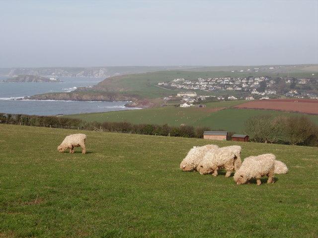 Farmland and coastal view