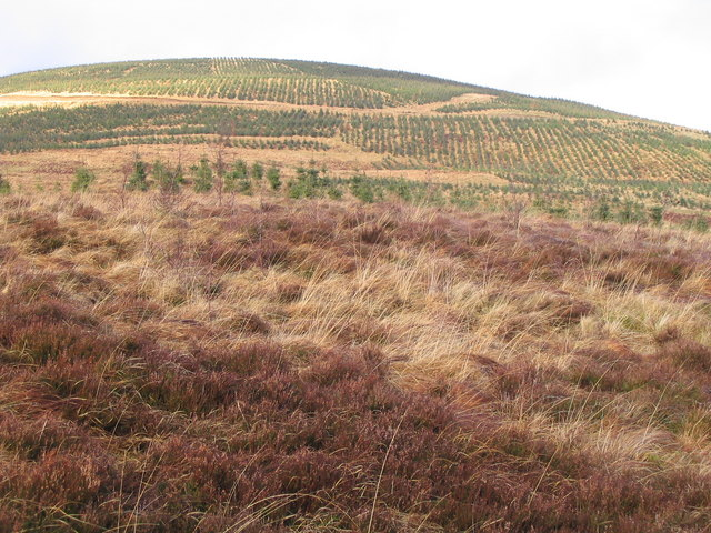 Reafforestation in Oliver Forest, Tweeddale