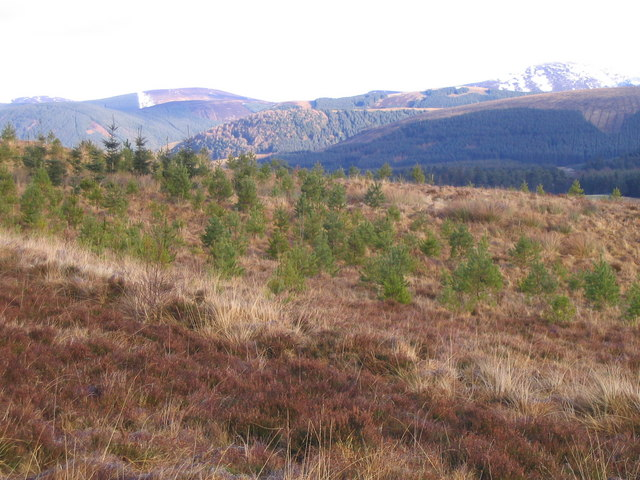 Looking across Tweeddale
