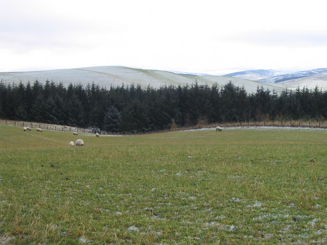 Sheep grazing and woodland at Whinnybrae