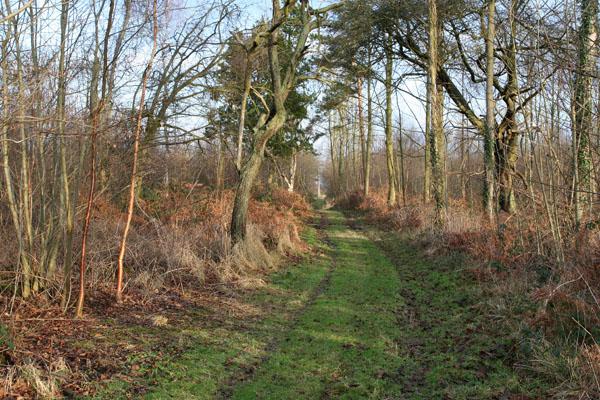Gateforth Wood
