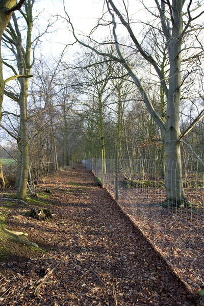 Deer fence around Gateforth Wood