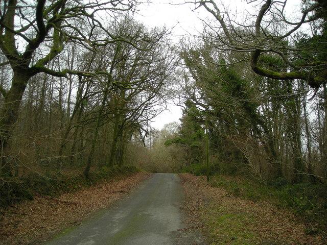 Heol y Wig/Forest Road