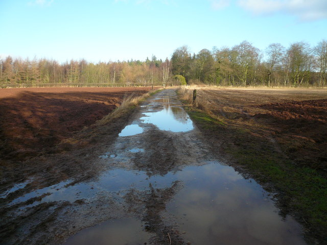 Track between Roseland Wood and Langwith Wood