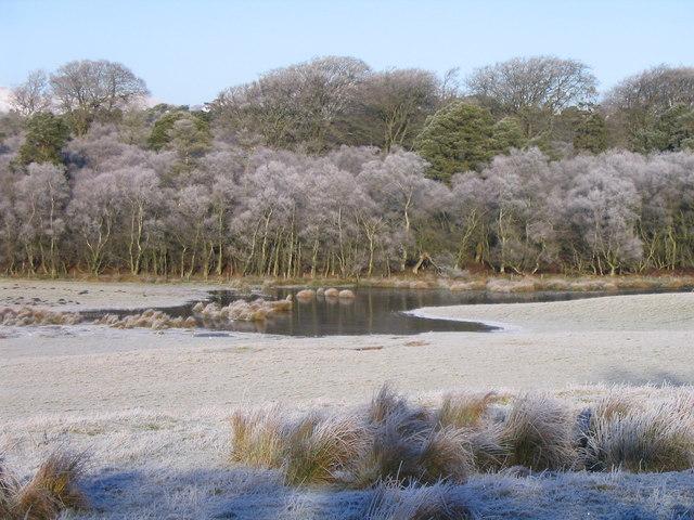 Frosty birches at Lamancha