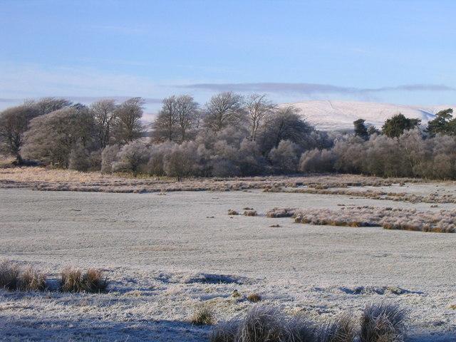 Frosty field and woodland at Lamancha