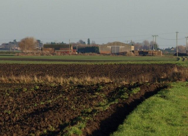Fen Fields