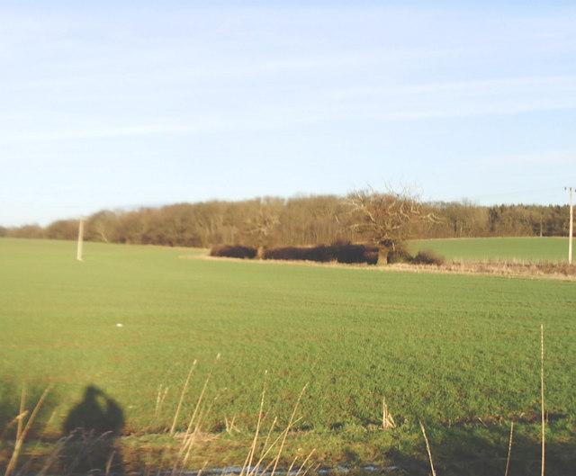 Midloe Wood
