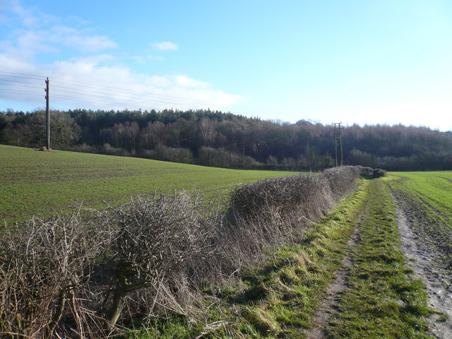 Footpath View in direction of Langwith Wood