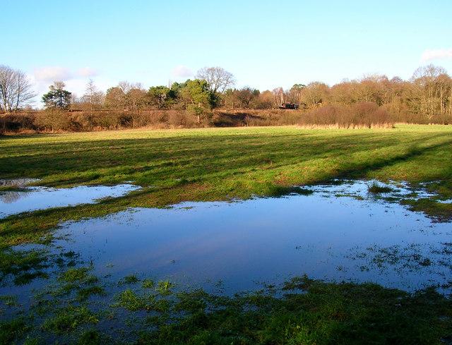 Waterlogged Field, Birchden Wood
