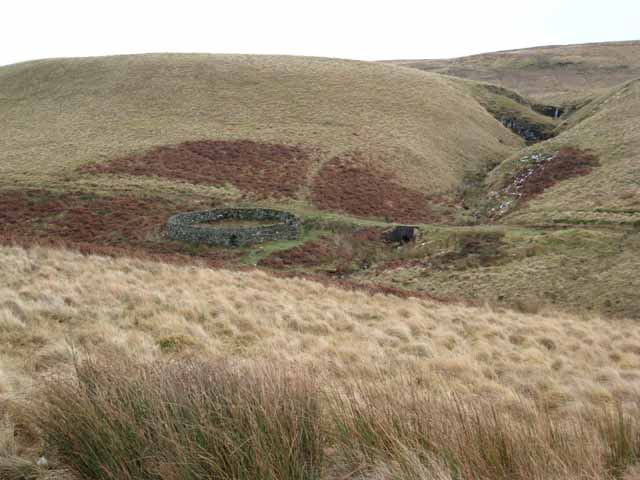 Sheepfold near Cottonshope