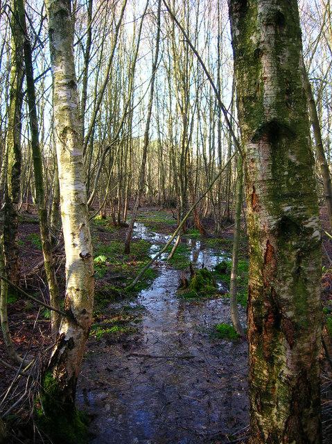 Birchden Wood