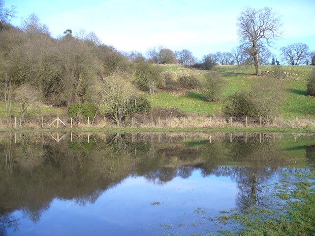 Pond by Lawbrook
